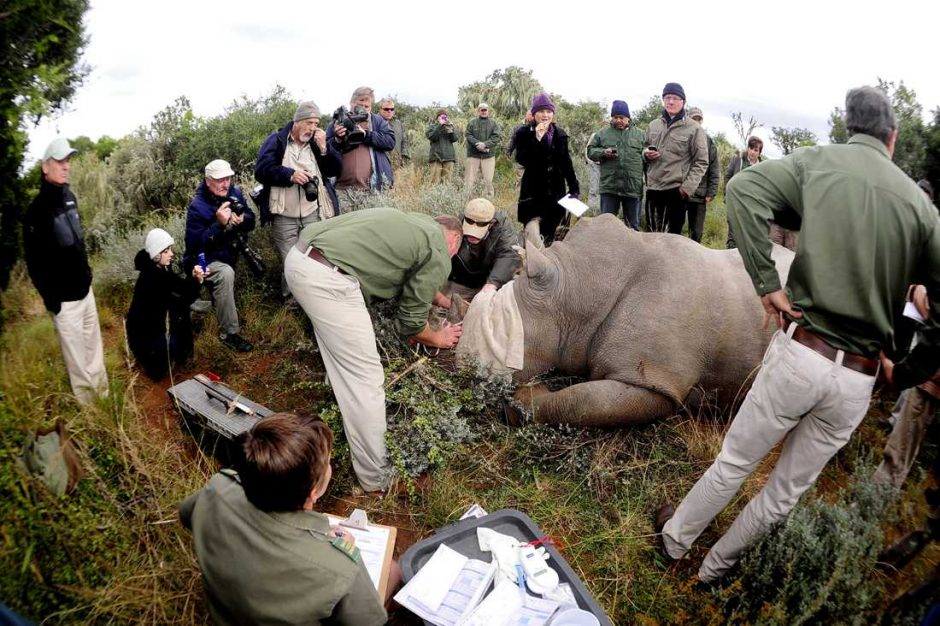 Help to fight the plight of the rhino