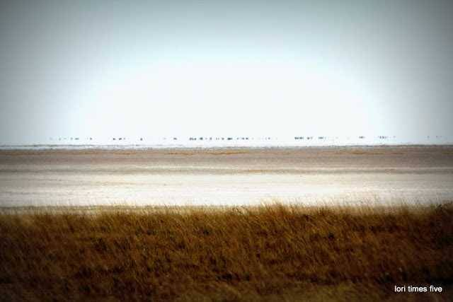 """""""Etosha means 'place of mirages' , 'land of dry water' or the 'great white place.' The silvery white sand plays tricks on your eyes, and mirages blur the horizon."""""""