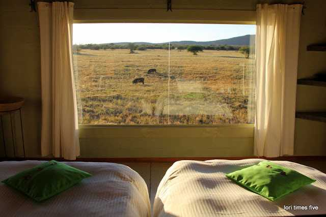 """""""Okonjima - home of the Africat Foundation. Set amid the rolling Omboroko mountains, this protected 20,000 hectare wilderness is a place chuck has wanted to return to for 17 years."""""""