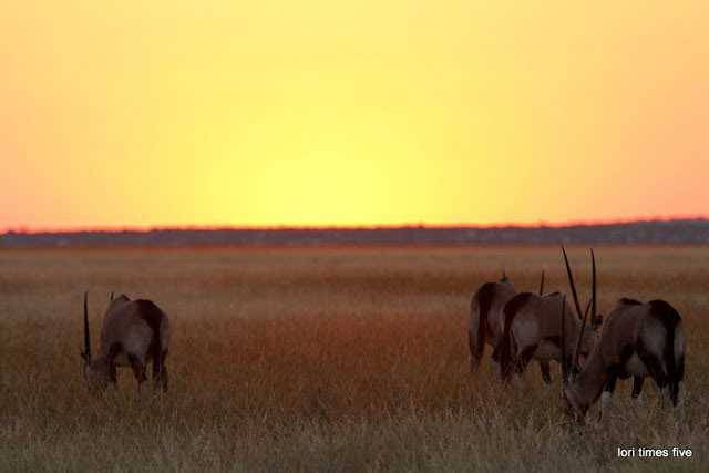 Oryx grazing in the last light of the plateau.