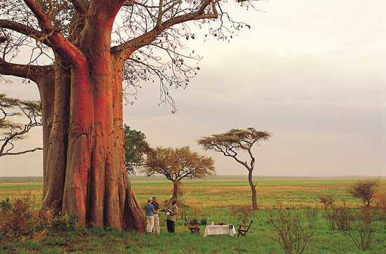 The mighty baobabs in Tarangire National Park