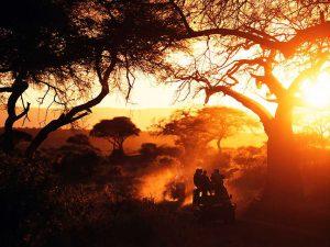 An Africa sunset in Tarangire National Park