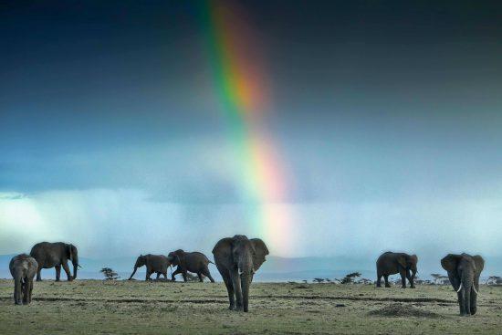 A população de animais selvagens do Serengeti e diversidade inigualável, razão pela qual é uma das principais atrações da África Oriental