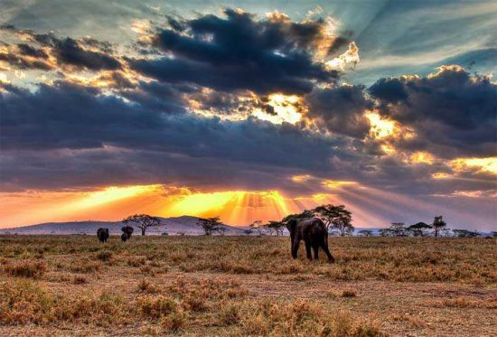 Serengeti offers magical sights