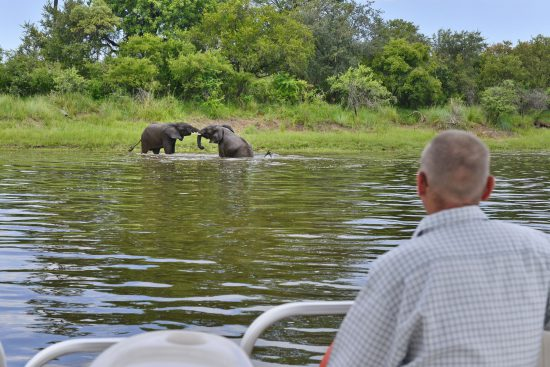 A man watches elephants fighting from boat