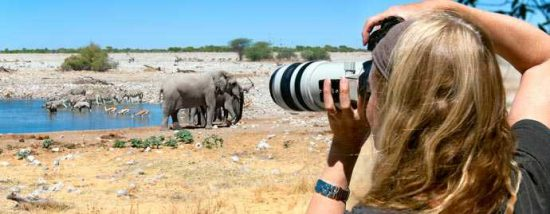 Elefantes sendo fotografados. Foto: Etosha National Park