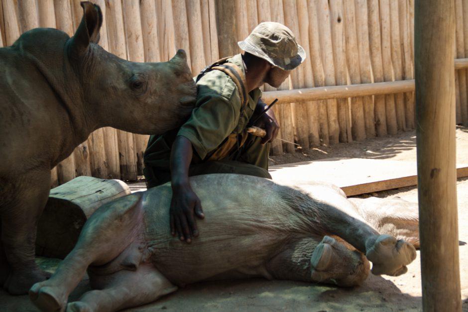 Rhino Guard in South Africa