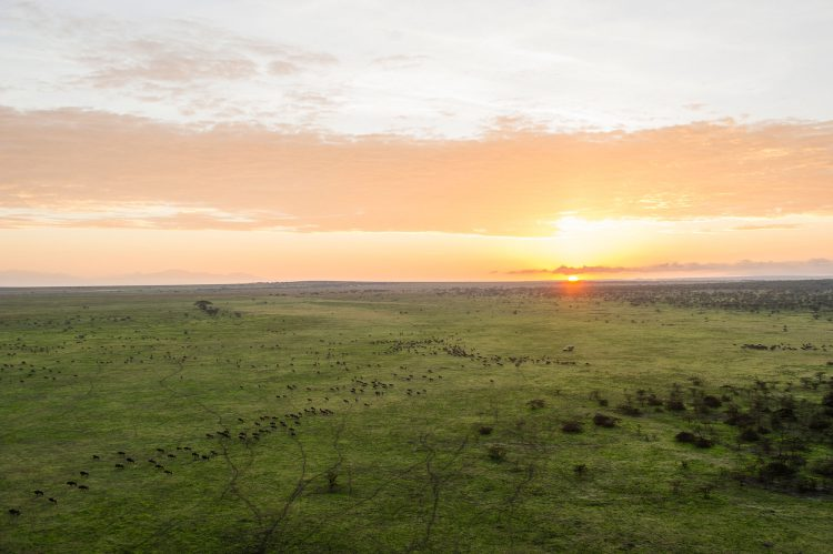Malerischer Sonnenuntergang in der Serengeti