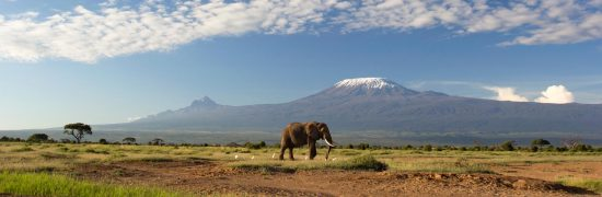 An elephant in front of Mount Kilimanjaro
