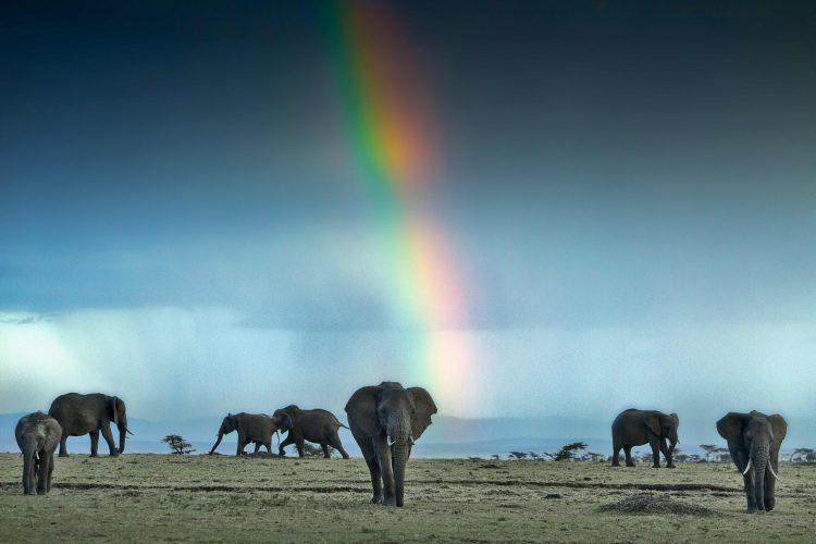 Ein Regenbogen über einer Elefantenherde in Afrika