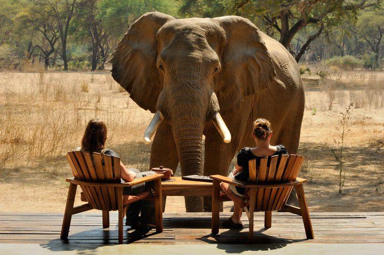 Zwei Frauen sitzen auf einer Holzterrasse und ein Elefant steht direkt vor ihnen