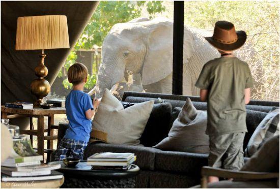 Children watch an elephant nearby