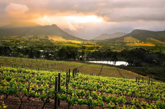Vineyards and mountains of Franschhoek