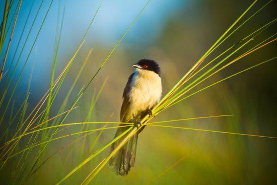 A observação de pássaros é um deleite durante a temporada verde