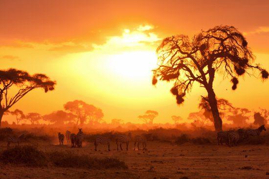 Amazing sunset with zebras