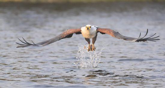 Capture wild birds on your Photographic Safaris