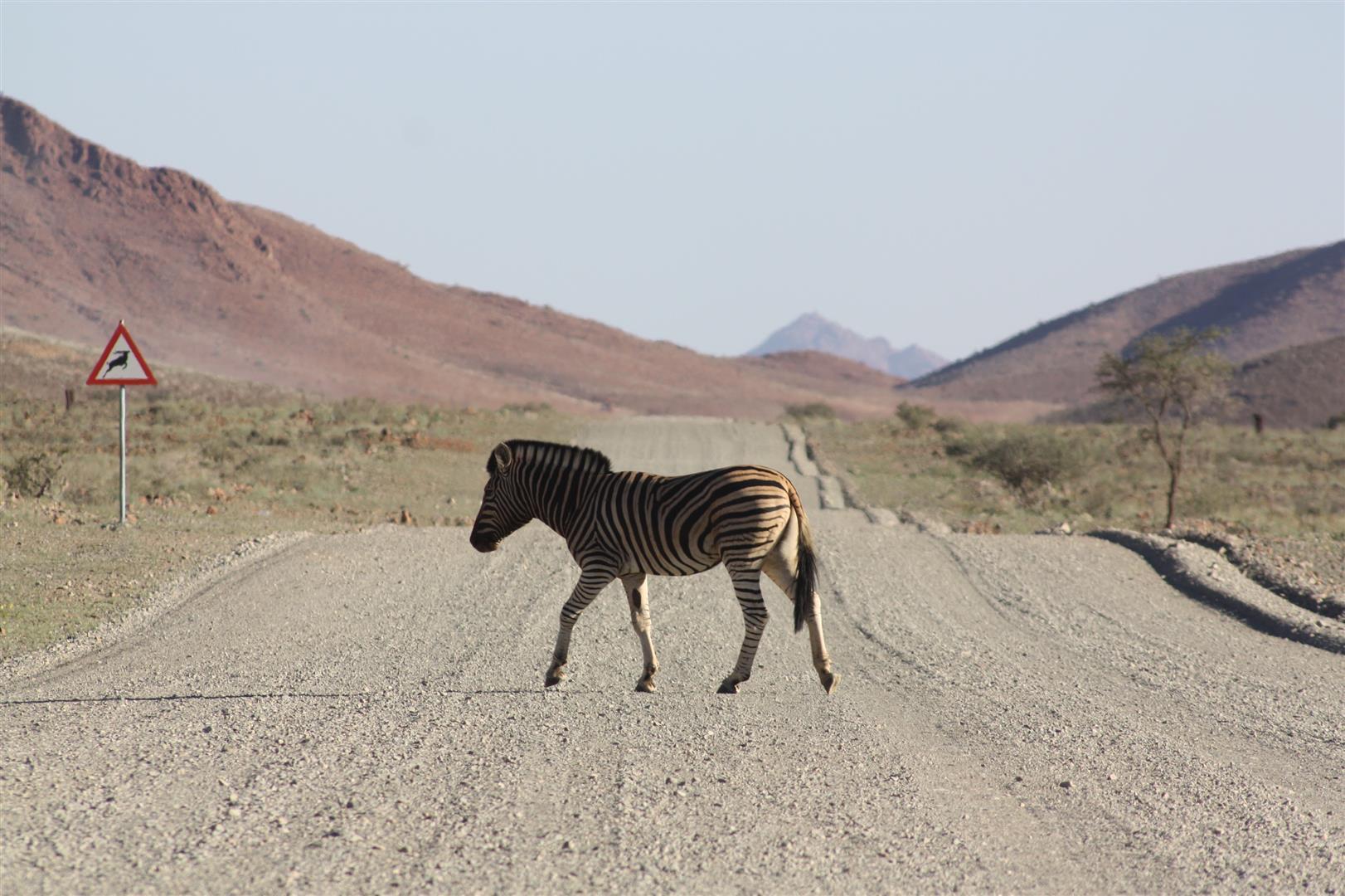 An actual zebra crossing in Namibia