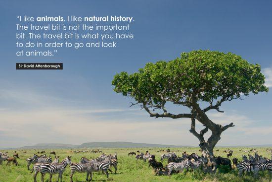 David Attenborough Poster Quote