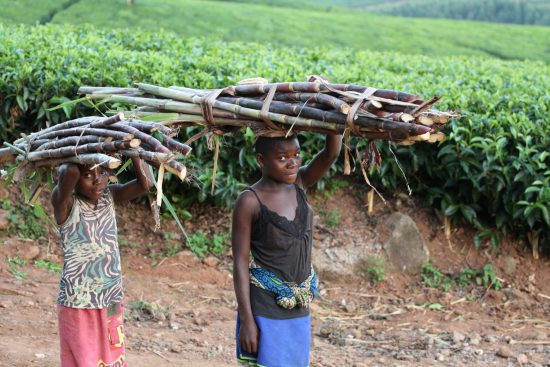 Wood collectors in Malawi