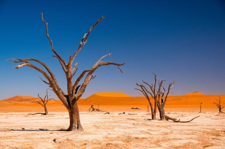 Abgestorbene Bäume in der Sossusvlei