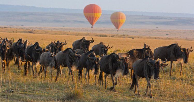 Ostafrika mit der Großen Migration ist die Grundlage für viele Reisezitate