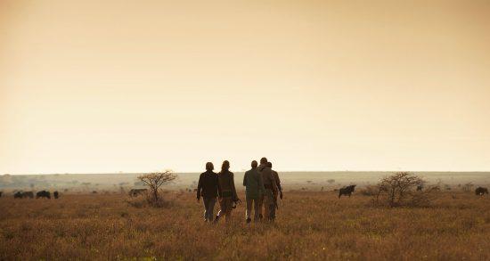 Explore this signature Southern Africa Safari today