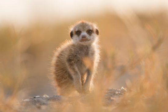 Botswanas Tierwelt umfasst die ganz Kleinen...