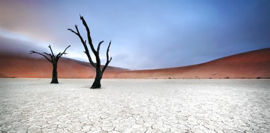 The trees of aptly named Deadvlei