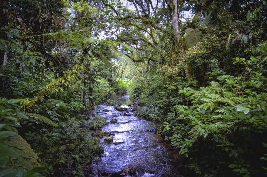 A creek through dense jungle