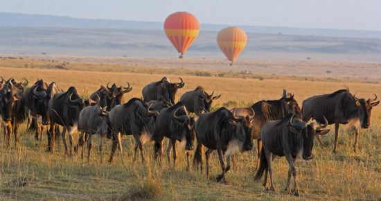 Gnu-Sichtung auf einer Heißluftballon-Safari in Kenia