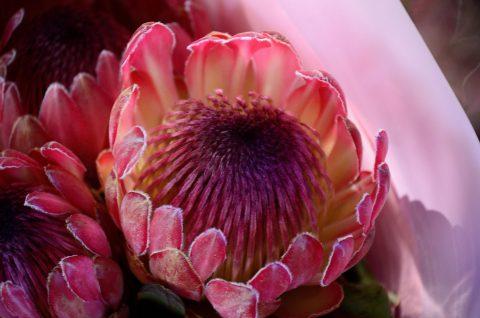 fleur d afrique rencontre a proximite gratuitement