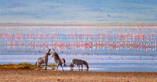Zebras und Flamingos in den Ebenen des Ngorongroro Kraters