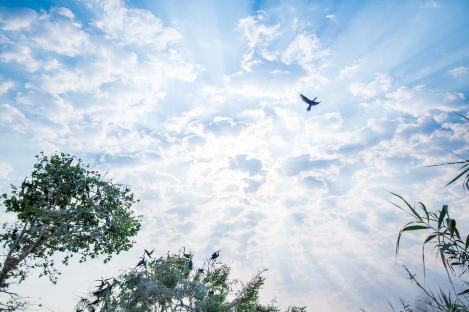 In der Green Season nach Botswana reisen: Blauer Himmel und Sonnenschein