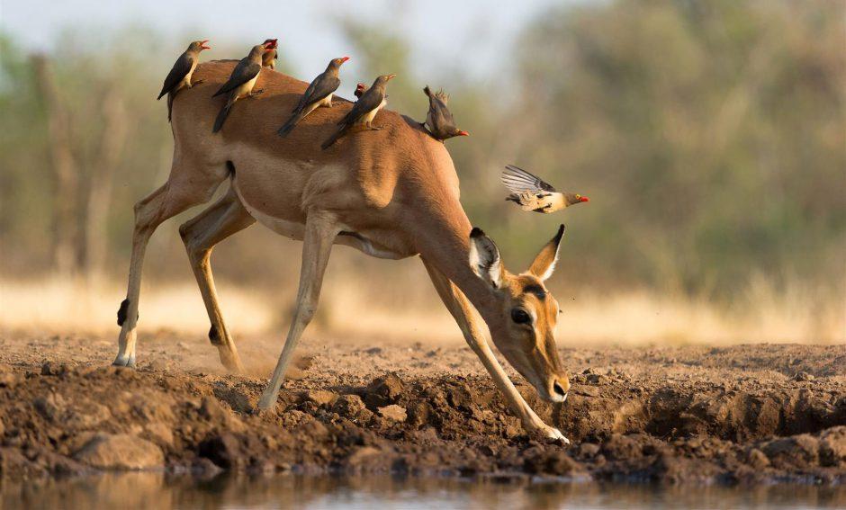 Eine artenreiche Vogelwelt - ein Grund in der Green Season nach Botswana zu reisen