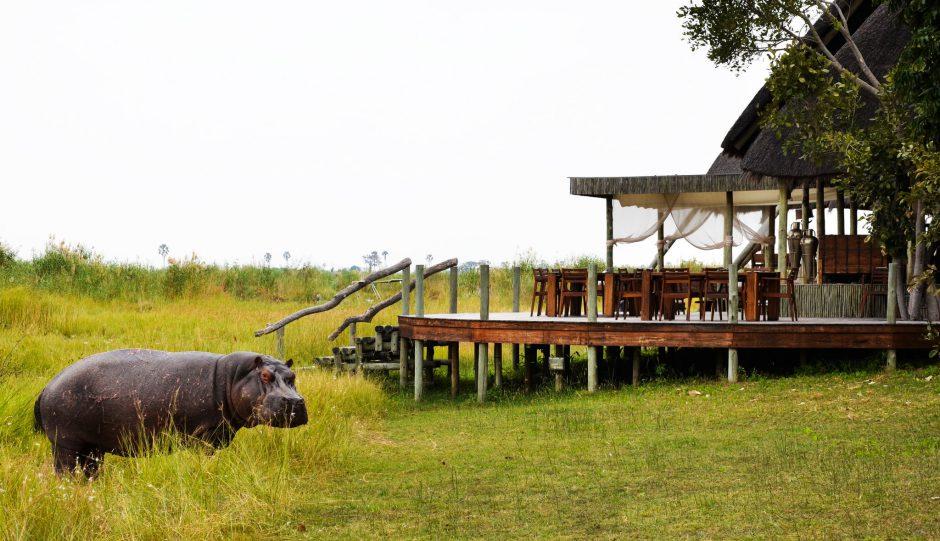 Green Season rund ums Selinda Camp - inklusive Besuch von Nilpferden