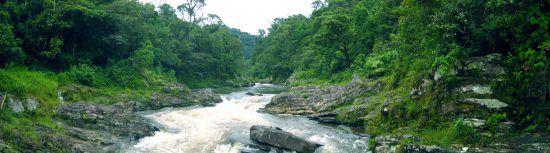 A river in Ranomafana national Park, Madagascar