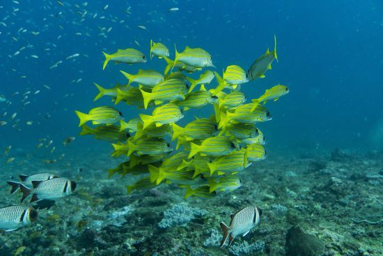 Colourful fishes swimming in the waters of Madagascar