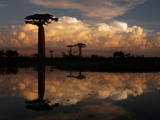 Baobab Alley in Madagascar at sunset