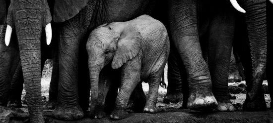 Kleiner Elefant inmitten einer Herde
