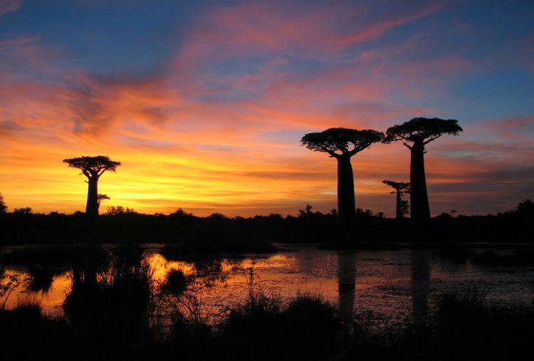 Baobab-Bäume bilden Silhouetten vor farbenfrohem Sonnenuntergang in Afrika