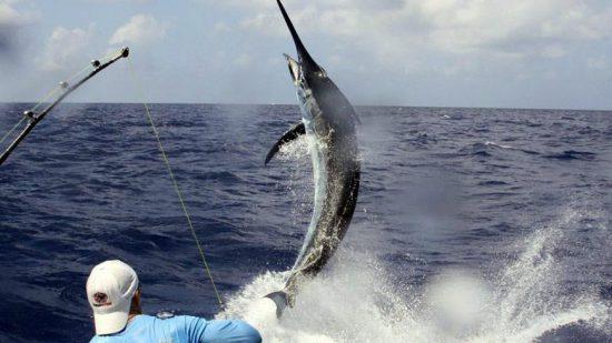 La pêche au gros dans le top activités nautiques en Afrique