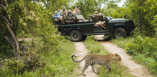 Spot leopards at Kruger National Park