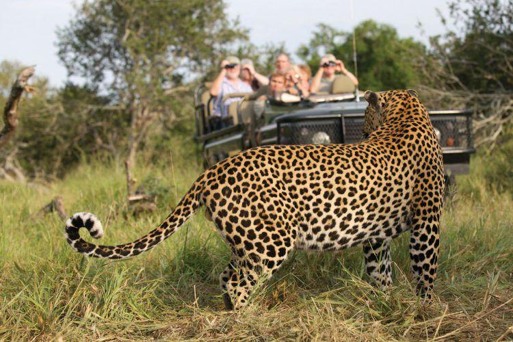 Safari na Reserva Privada de Animais MalaMala