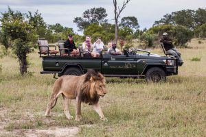 Sabi Sand Game Reserve : safari en voiture