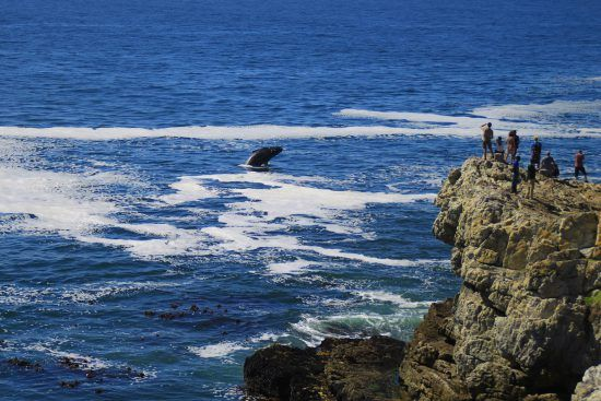La saison de baleines à Hermanus