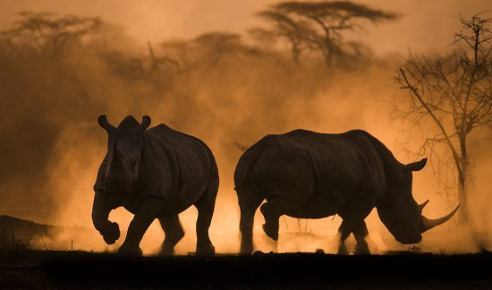 Africa's Photographer of the Year Big 5 winner