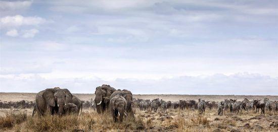 Elefantes e animais de planícies são fotografados no Parque Nacional Etosha. Foto: Ben McRae / Alamy