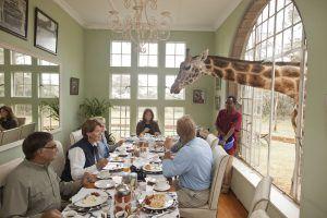 Breakfast with giraffes at Giraffe Manor