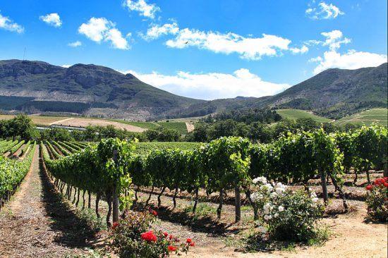 Os vinhedos de Groot Constantia compõem um cenário romântico e sereno