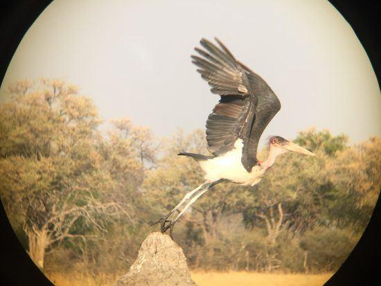 Fotografar aves pode ser difícil, mas não é impossível com um iPhone